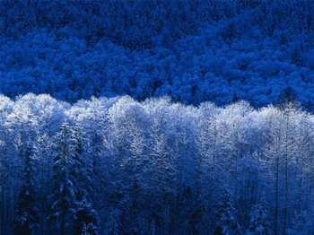 Foret-bleue-small